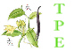 La vanille du point de vue biologique et chimique grace a un TPE                                  : La vanilline une mol�cule de synth�se et / ou naturelle ?